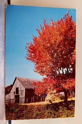 Scenic Blazing Autumn Colors Harmony Postcard Old Vintage Card View Standard PC