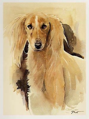 Vintage SALUKI Dog Print Saluki Illustration  Beautiful Dog Art Print #1877