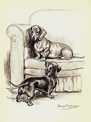 Vintage 1950s DACHSHUND Dog Print Gallery Wall Art Gift For Dog Lover 1882