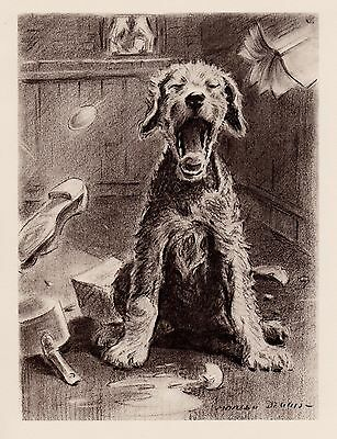 1946 Vintage AIREDALE TERRIER Print Naughty Dog Airedale Gallery Wall Art 1884