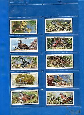 *BIRDS & THEIR YOUNG*Full Set of 50+Sleeves-Players-Exc
