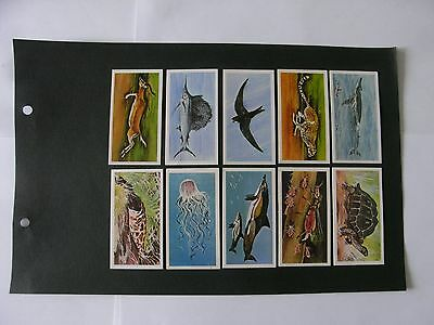 Full Set x 50 Brooke Bond Tea Cards.  Wonders of Wildlife.   1976.