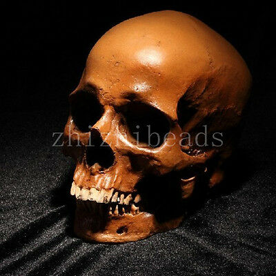 New Collection Value Human Skull Replica Resin Model Medical Realistic11x7x8.5cm