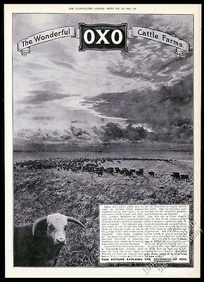 1910 Hereford cow bull cattle herd photo OXO beef food BIG UK vintage print ad