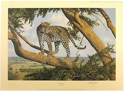 "ANTHONY GIBBS ""Mara Lookout"" leopard tree LE SIGNED SIZE:52cm x 71cm NEW RARE"