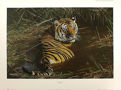 "ANTHONY GIBBS ""One of the Few"" tiger SIGNED limited ed! SIZE:57cm x 78cm NEW"
