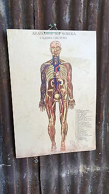 Vintage Anatomy Bulgarian Skeleton old School Medical Science Poster Design Body