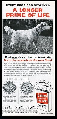 1955 English Setter photo Gaines Dog Meal food vintage print ad