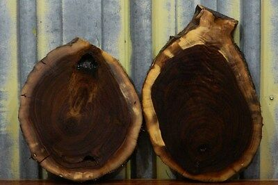 2- Black Walnut Rustic Circle Cut Tree Rounds/ Wooden Table Tops 6703-6704