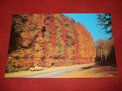 VINTAGE SCOTLAND: BLAIRGOWRIE beech hedges colour CAR