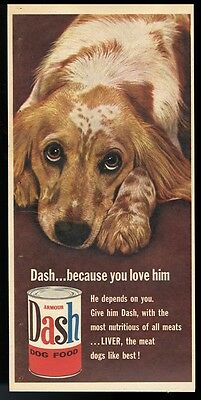 1957 English Setter color photo Dash dog food vintage print ad