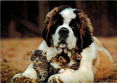 ST BERNARD DOG TAKES GOOD CARE ABOUT THREE KITTENS Modern Russian card