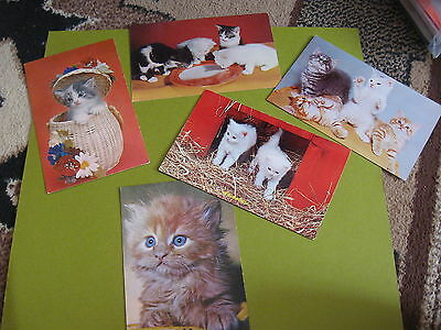lot of 5 vintage real cat postcards lot A(free ship $20 min)