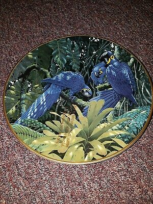 Miracles of the Rainforest Hyacinth Macaws Richard Sloan Tropical