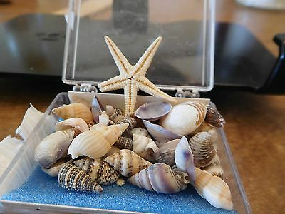 Sea Shell Collection--Fun & Educational