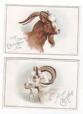 Pair Raphael Tuck Victorian Christmas Cards Goat Head Portraits Helena Maguire