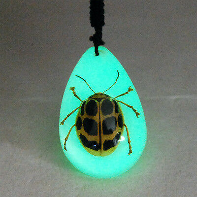 New Real Ladybug Glow Lucite Necklace Pendant Insect Jewelry Taxidermy Gift