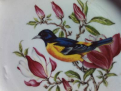 Royal Cauldon Hand Painted Baltimore Oriole design by H A Pausch .