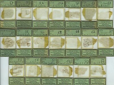 20 Mineral Thin Section Microscope Slides by Voigt & Hochgesang