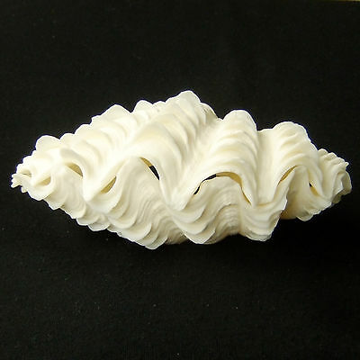 1 Pair Tridacna Squamosa Fluted Giant Scaly Clam Seashell 13.5cm Free Ship 310a
