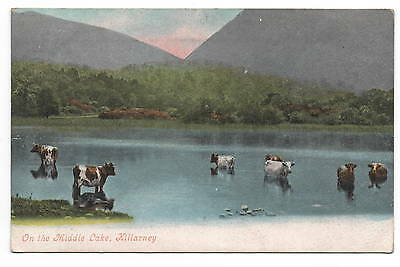 Vintage Valentine posted 1904 On the Middle Lake Killarney Message upside down