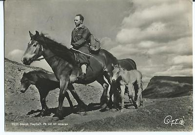 Black & White Postcard of Norwegian on Horse with Ponies on Mountain