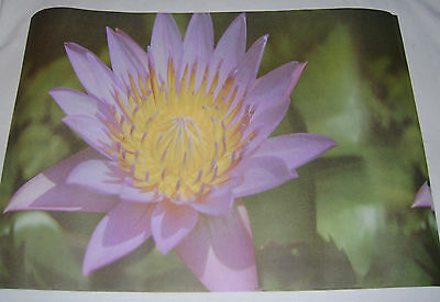 New 6 Sheets Purple Lotus Bamboo Flower Scented Perfumed Paper Drawer Liners Dgi