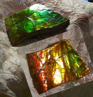 """70x45mm Red Change to Green AMMOLITE Ammonite Bright Colors 2.75""""x 1.75"""""""