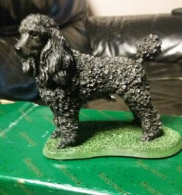 Black poodle by Livingstone