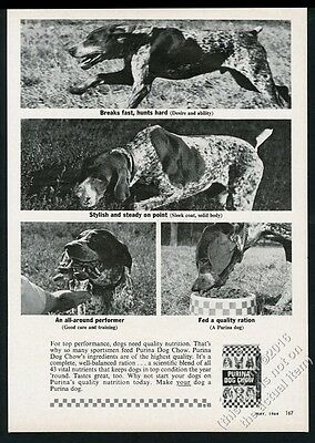 1964 German Shorthaired Pointer 4 photo Purina Dog Chow vintage print ad