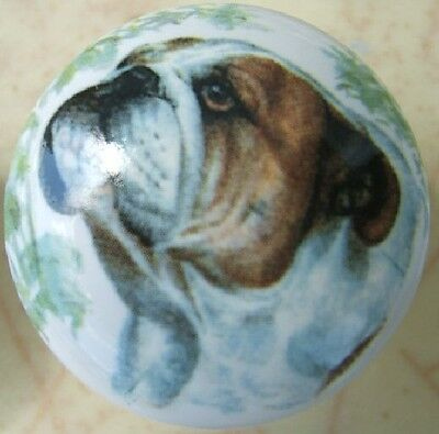 Cabinet Knobs w/ English Bulldog DOG Monica Heller Cole