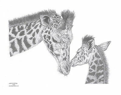 GIRAFFE mother calf foal art drawing prints 2 sizes A4/A3 & Note greetings Card