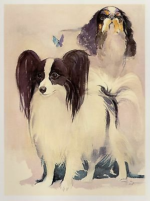Vintage PAPILLON and ENGLISH TOY Spaniel Dog Print Gallery Wall Art #1988