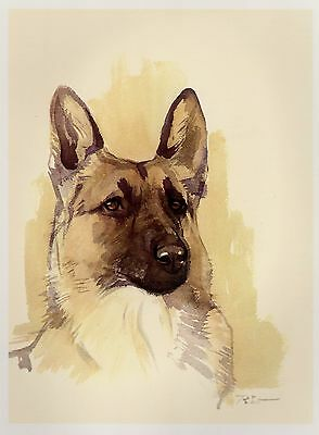 Vintage GERMAN SHEPHERD Dog Print Gallery Wall Art Lovely German Shepherd #1993