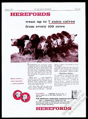 1958 American Hereford Association cow cattle calves photo vintage print ad