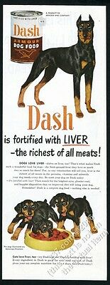 1951 Doberman Pinscher and puppy dogs art Dash Dog Food vintage print ad