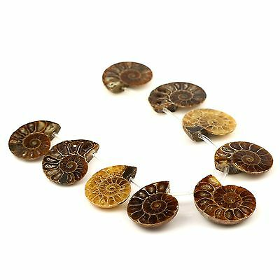 9Pcs Side Drilled Natural Ammonite Fossil Loose Gemstone Beads Set