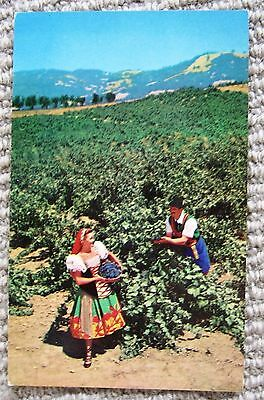 Italian Swiss Colony Postcard, ca. 1960, Vineyards, Asti, Sonoma County, CA