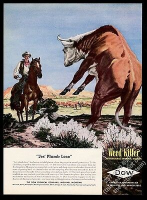 1946 cowboy horse cattle herd cow locoweed art Dow vintage print ad