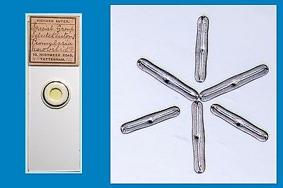 Antique Microscope Slide Selected Diatoms ~ Pinnularia Nobilis ~ by R. Suter