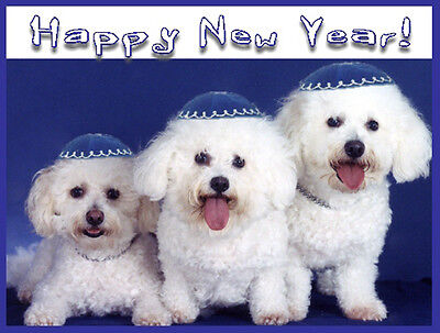 Pet Jewish New Year Cards Dog: Rosh Hashanah Bichon Frise