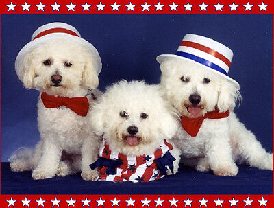 Pet Greeting Cards:Dog Patriotic Bichon Frise