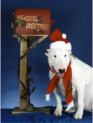20 Pet Christmas Cards:Dog Bull Terrier