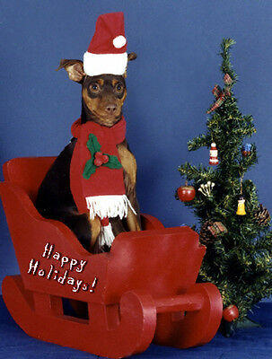 20 Pet Christmas Cards:Dog Mini Pinscher