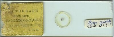 """""""Family Group"""" Microphotograph Microscope Slide by J.B. Dancer"""