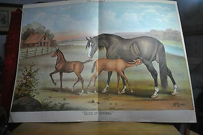 1886 Beautiful Thoroughbred Horse Print, Buds Of Spring, Artist H.h. Cross