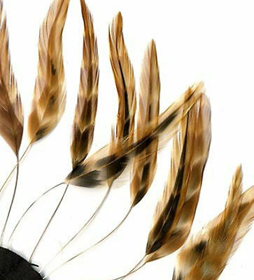 Chinchilla Stripped Hackle Feathers. Sewing, Costuming, Fascinators and Hats