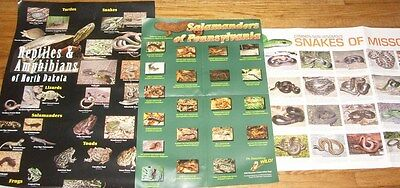 LOT # 1 - THREE REPTILE POSTERS - 72 species with color photos