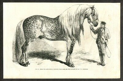 1857 Antique Print of a Shire Draught Horse Heavy Draft Horse