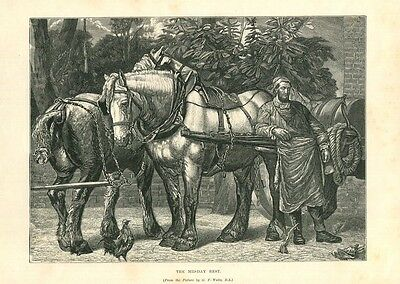 1882 Antique Print of a Shire Draught Horse Heavy Draft Horse